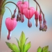 Bleeding Heart blossoms