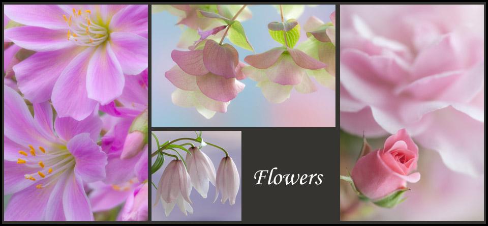 https://www.donpaulson.com/cms/galleries/nature/flowers/