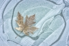 Frosty leaf on ice