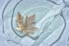 Frosty leaf on ice