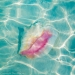 Conch shell in shallow water