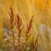 Doc seed heads and grasses - Utah, Wasatch Cache National Forest