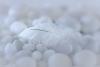 White Feataher on White Rocks
