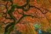Japanese maple tree in fall - Washington, Bainbridge Island, Bloedel Reserve