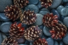 Pine cones and stones - 50.6mp