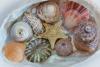 Pacific Northwest Sea Shells