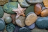 Seastar and Beach Rock