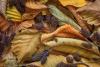 Alder Leaves and Cones