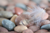 Beach Rocks and Feather