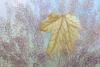 Fallen Maple Leaf #6117