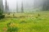 Canada; British Columbia; Revelstoke National Park