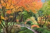 Oregon; Portland Japanese Garden; fall foliage