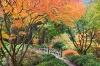 Oregon; Portland Japanese Garden; fall foliage