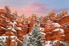 Snowy Morning, Red Canyon State Park, Utah