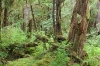 Forest, Martin Creek, Alaska