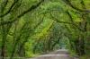 Oak trees over Botany Bay Road, Edisto Island, South Carolina