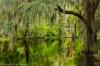 Cypress Swamp, Magnolia Plantation, South Carolina