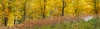 Maple trees and Hydrangeas, Bass Lake, Blue Ridge Parkway, North Carolina. High resolution, multi-image panorama