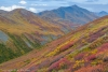 Fall color in the Brooks Range - Alaska, Brooks Range, near Atigun Pass