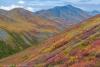 Fall color in the Brooks Range - Alaska, Brooks Range, near Atigun Pass