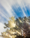 Morning God Rays (Vertical)