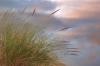 Pond-side Reeds, Oregon