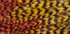 Feathers - High resolution, multi-image panorama 10951px x 5402px