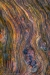 Detail of Driftwood