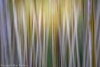 Alder Forest Abstract
