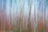 Alder & Red Osier Dogwood #1