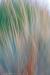 Ornamental Grasses in Motion