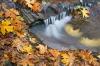 Oregon; Sweet Creek; fall color