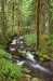 Oregon; Clackamas River Valley; Wine Creek