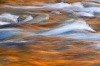 Reflections of Fall, Quinault River, Olympic National Park