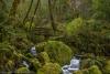 Oregon,  Loeb State Park