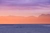 Alaska; Ketchikan; Orca; killer whale